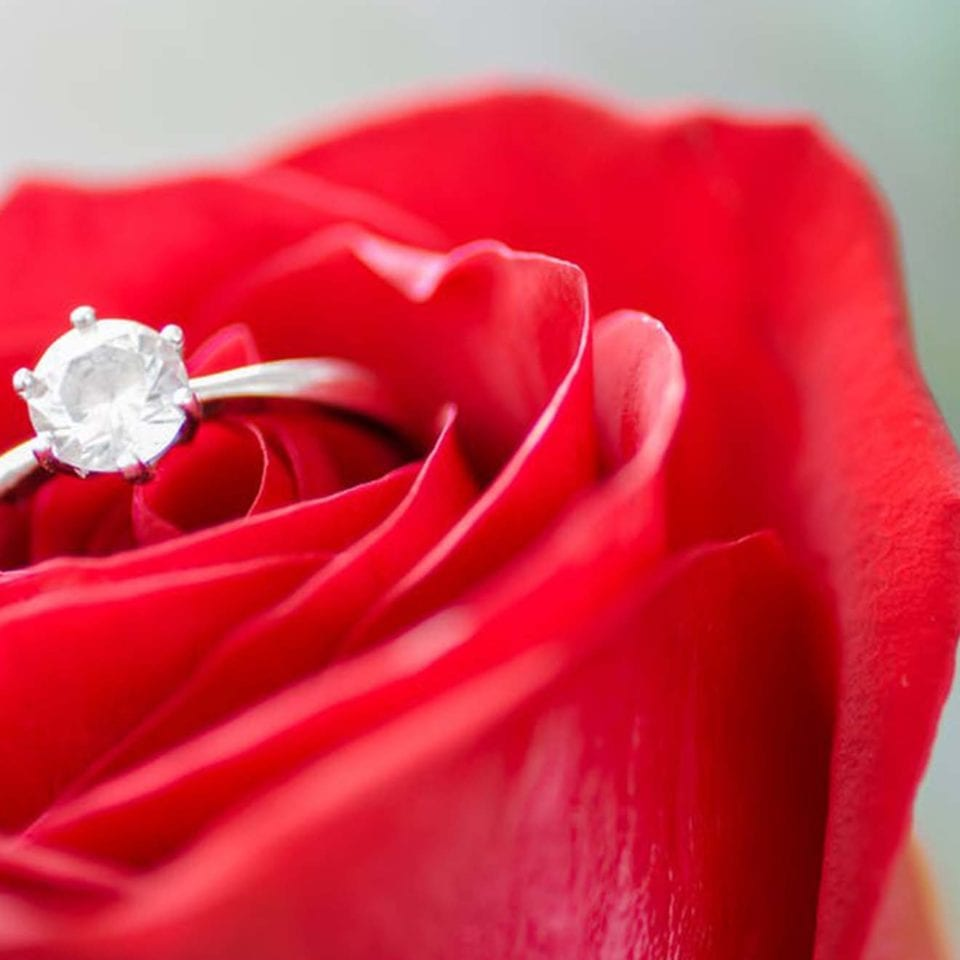 The Romantic One engagement ring and rose