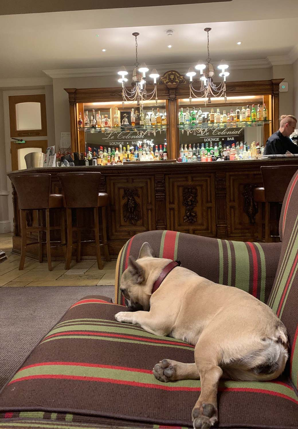 dog in le colonial bar